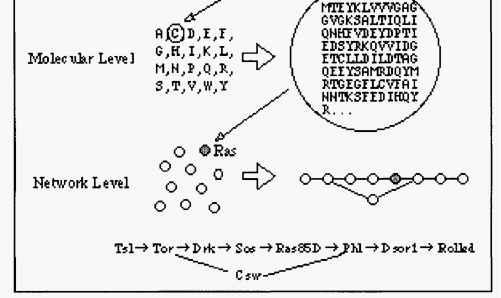 data representation in kegg - biology workbench