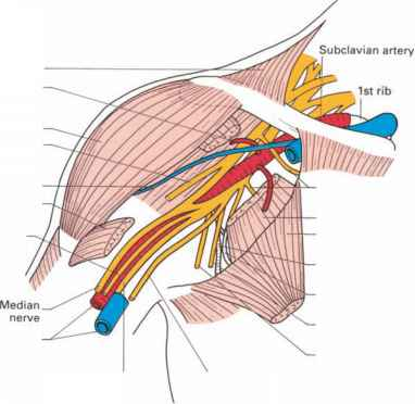 Pectoralis Major Nerve