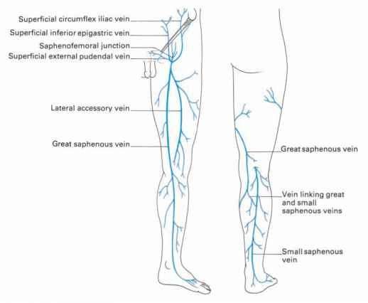the veins of the lower limb - clinical features