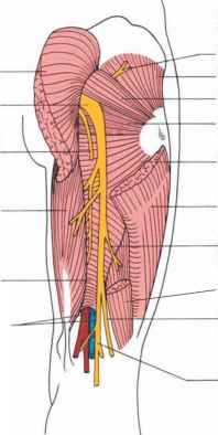 Popliteal Artery Post Exposure