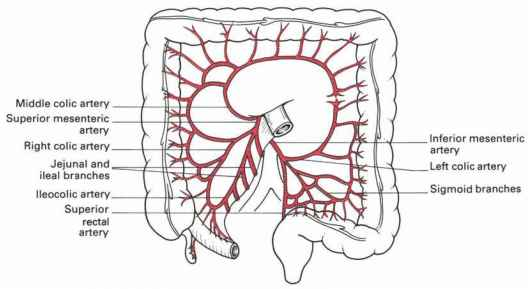 arterial supply of the intestine - clinical features, Cephalic Vein