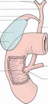 The Biliary System Clinical Features Click To Cure Cancer