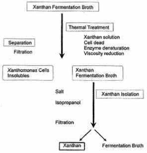 Diagram Xanthan Production