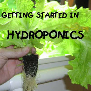 Hydroponic Plans