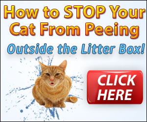 How to stop cats spraying in the house