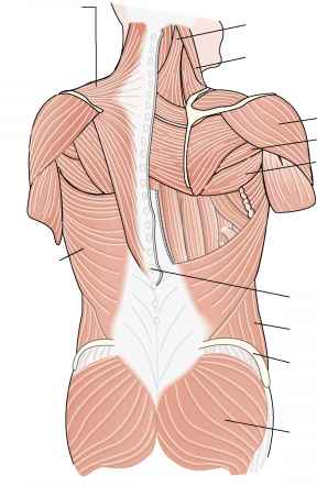 Psoas Muscle Physical Therapy Ent