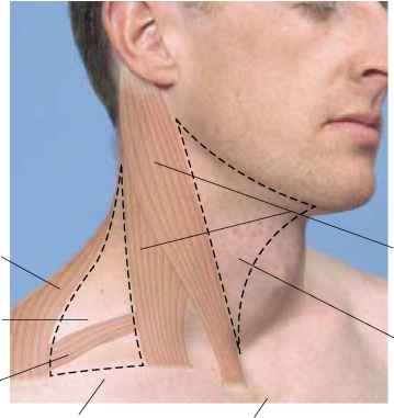 Submandibular Triangle