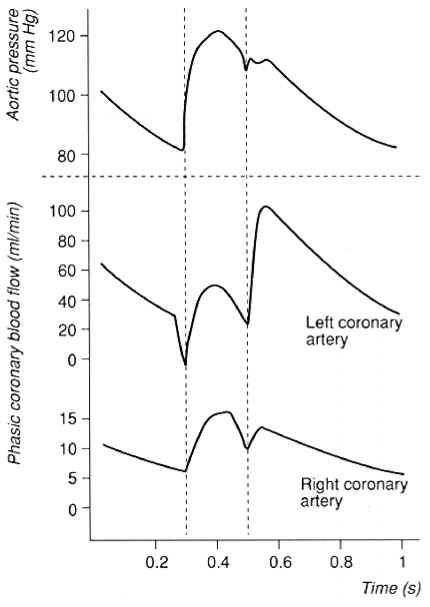 Coronary Flow And Aortic Pressure