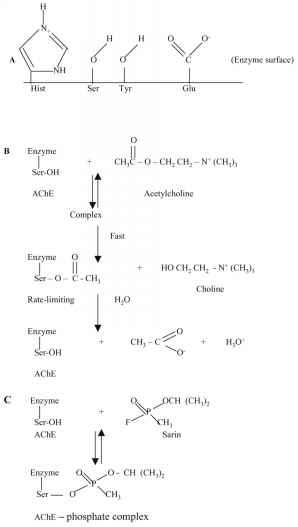 Mechanism Ach Hydrolysis Ache