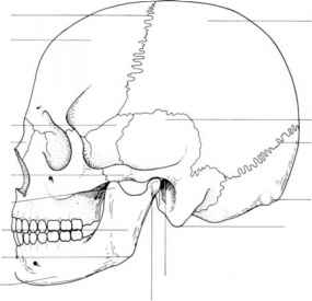 Features Mandible Mental Protuberance