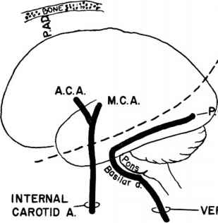 Blood Supply The Brain Mca Aca