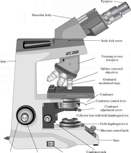 Key components of the compound microscope nuclear matrix transillumination knob microscope ccuart Image collections