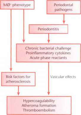 Thrombogenesis And Periodontal Disease