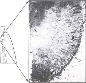 human body diagram nerves  human  free engine image for