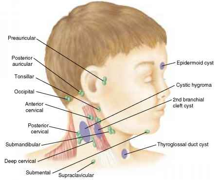 Posterior Cervical Nodes Children