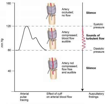 how to take brachial pulse