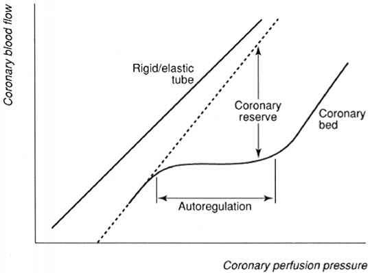 Autoregulation Coronary Hypertensive