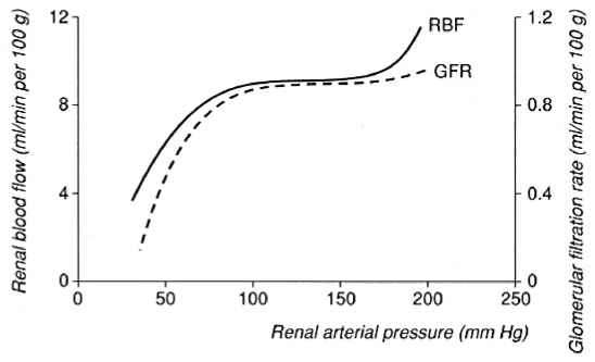 renal autoregulation The mechanism of renal autoregulation autoregulation is a remarkable property  of multiunit smooth muscles of small arteries and arterioles to respond to.