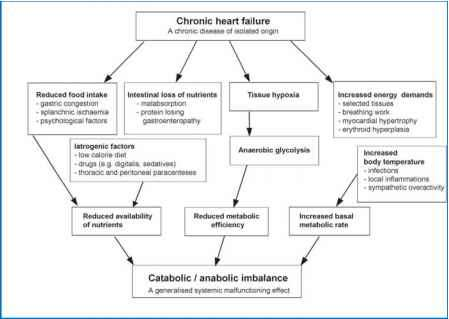 Cardiac Cachexia Pathophysiology